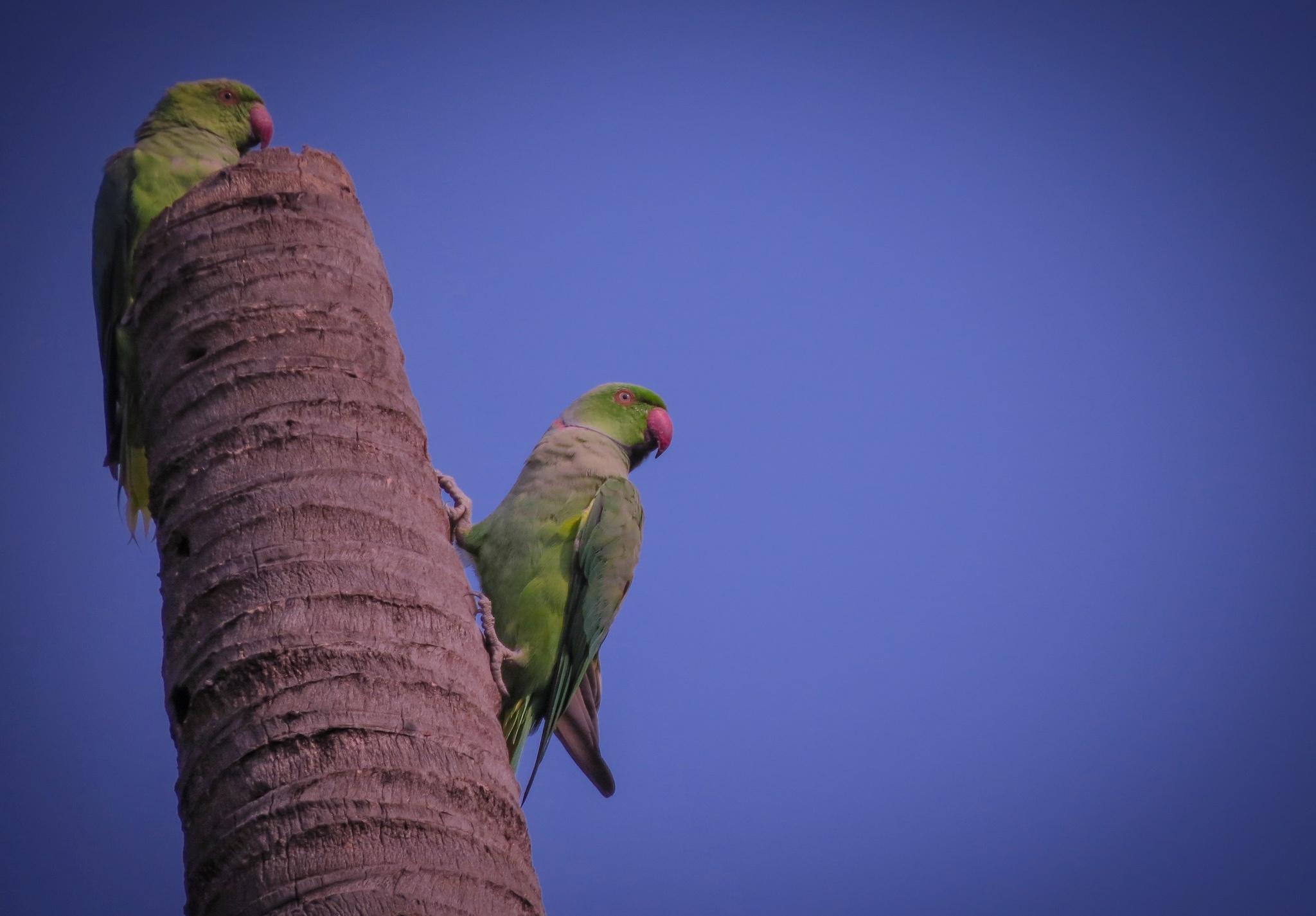 Parrots on a broken tree