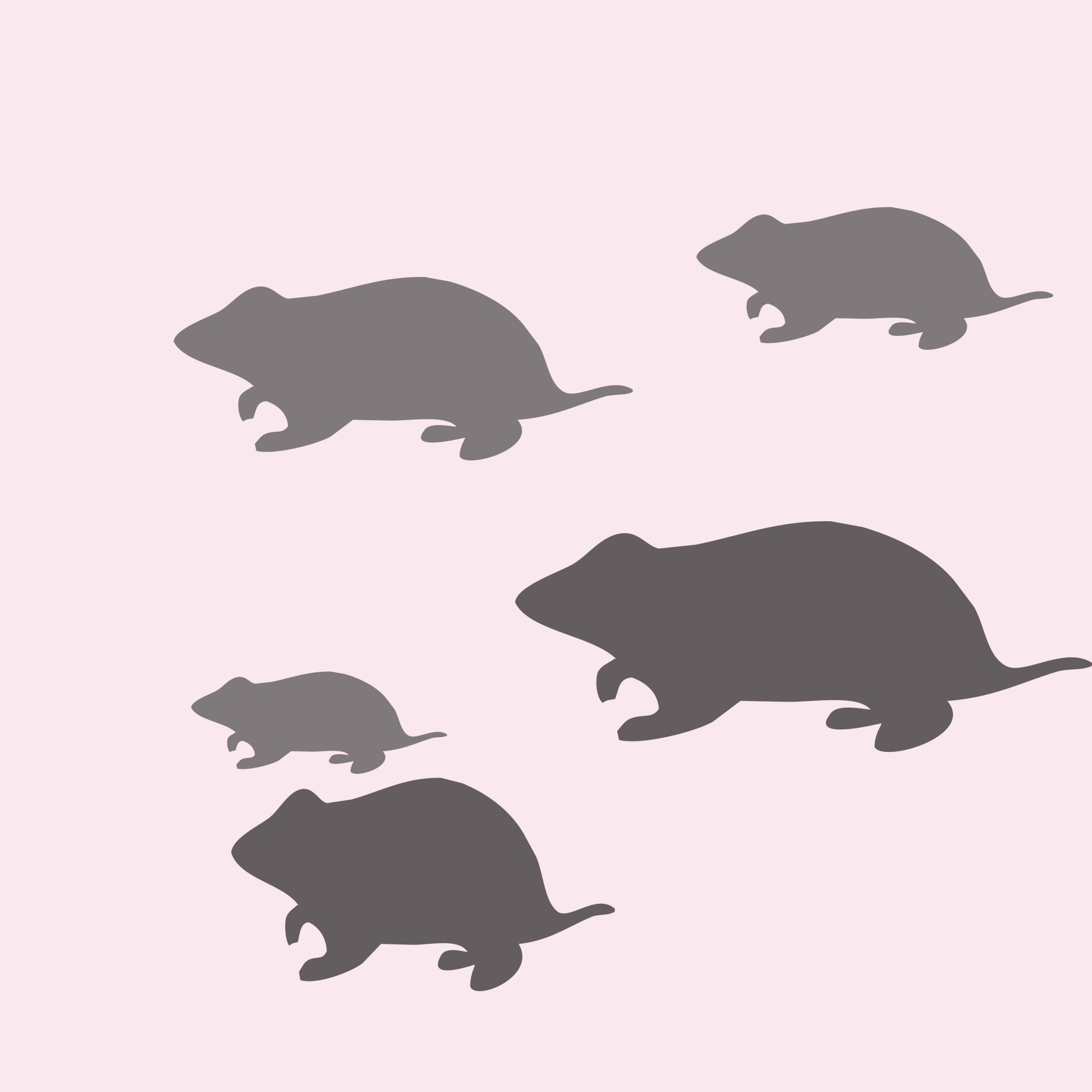 Rats illustration