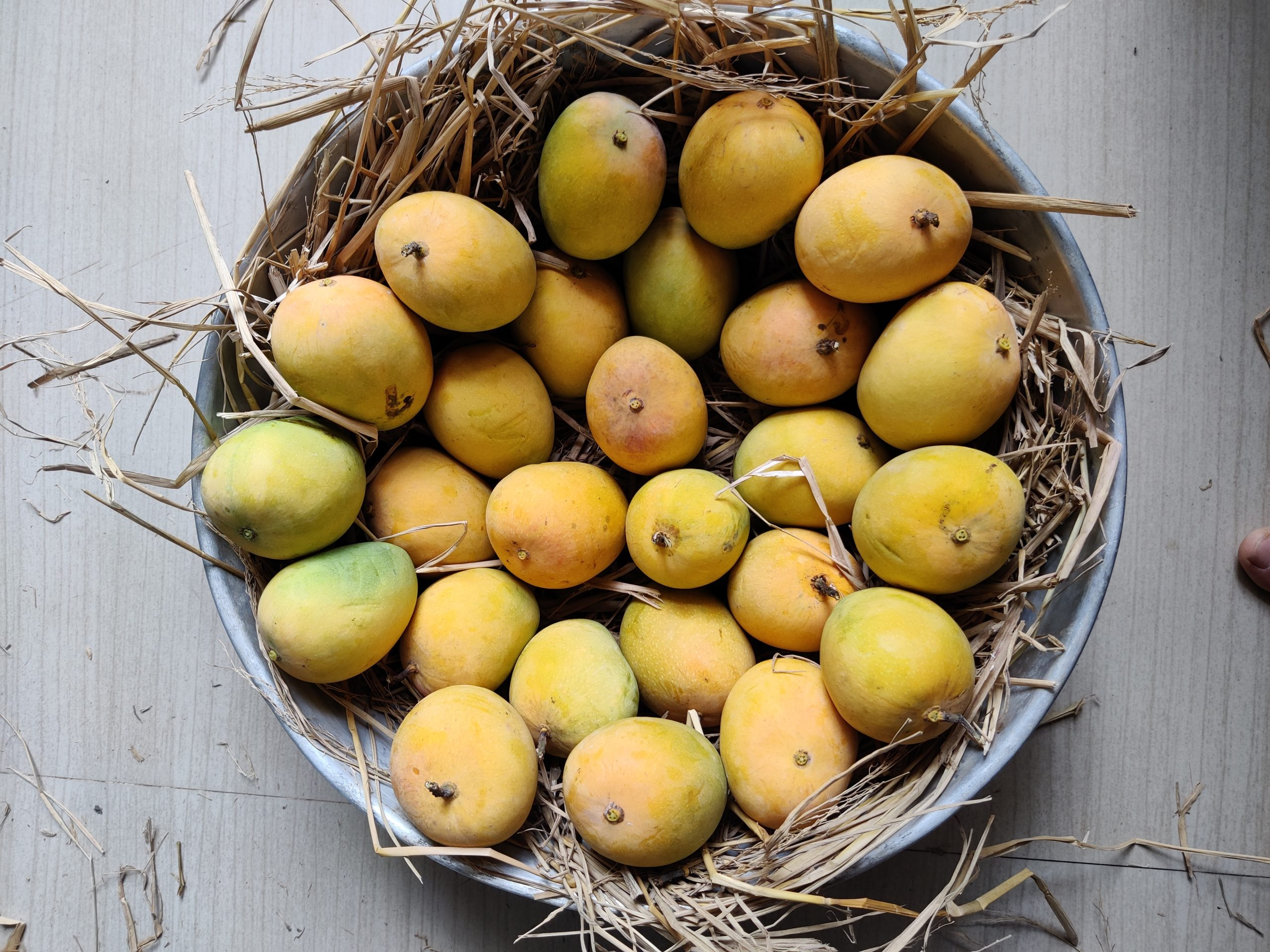 Ripe mangoes in a basket
