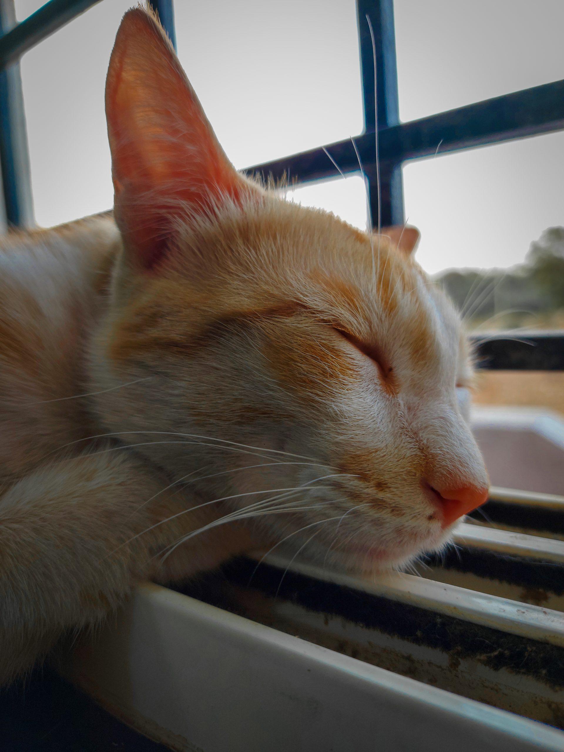 Sleeping cat at the window