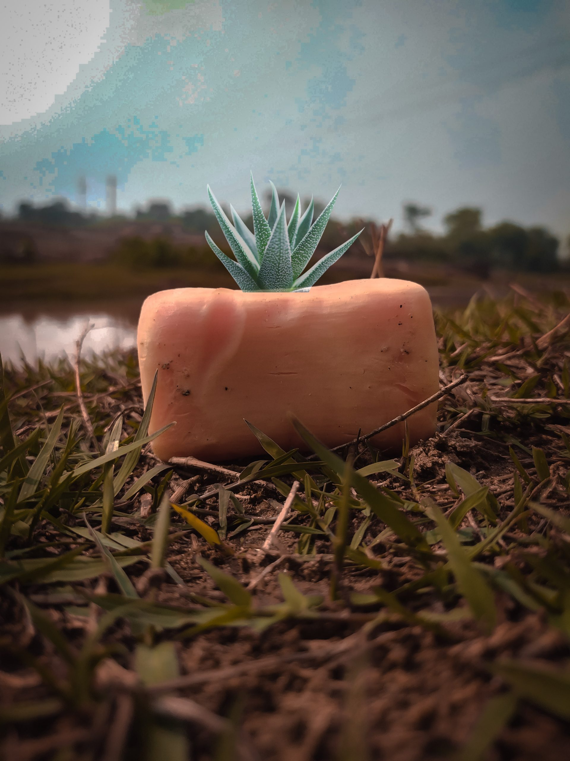 Soap in the grass