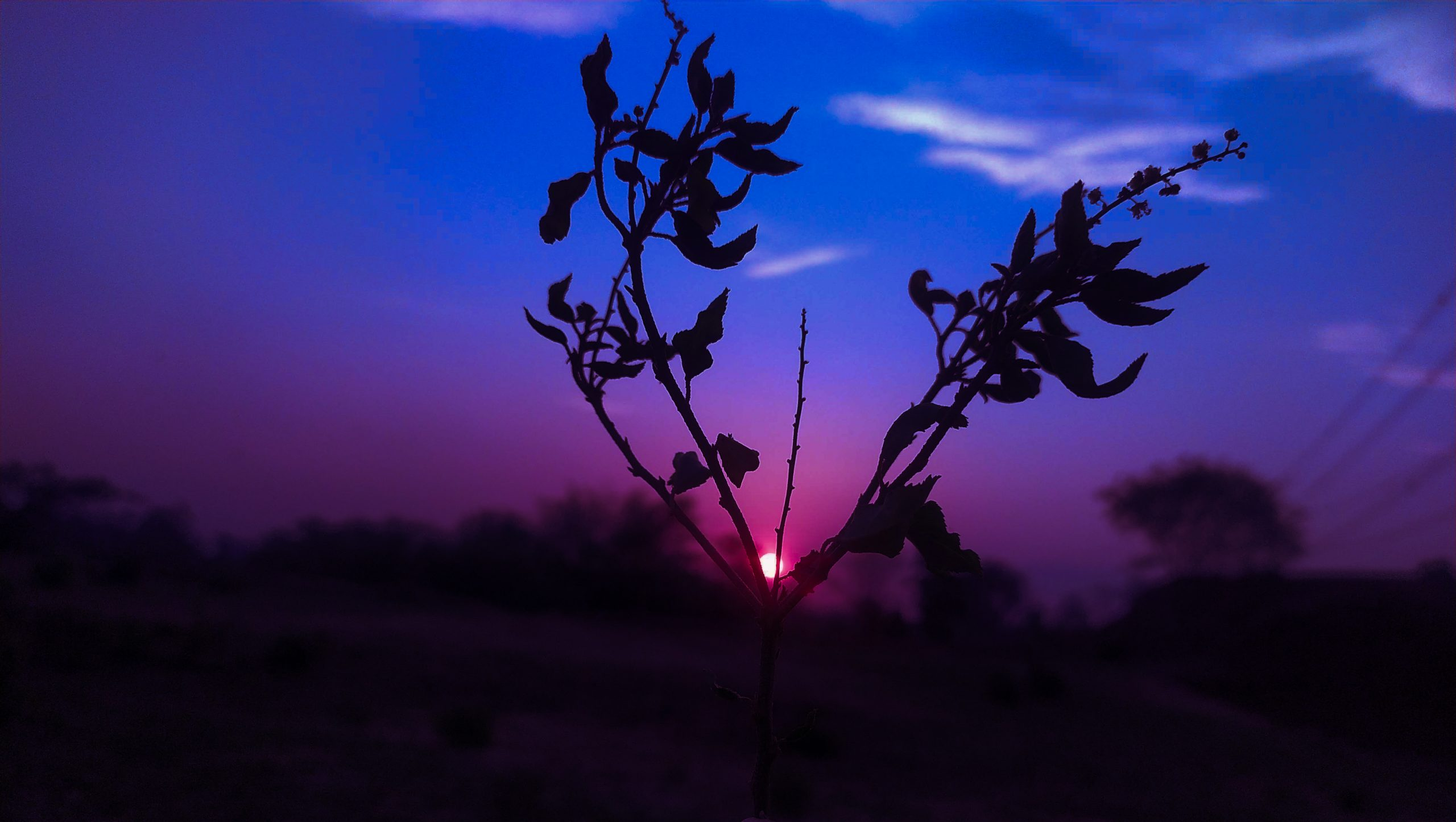 Sunset view through a plant
