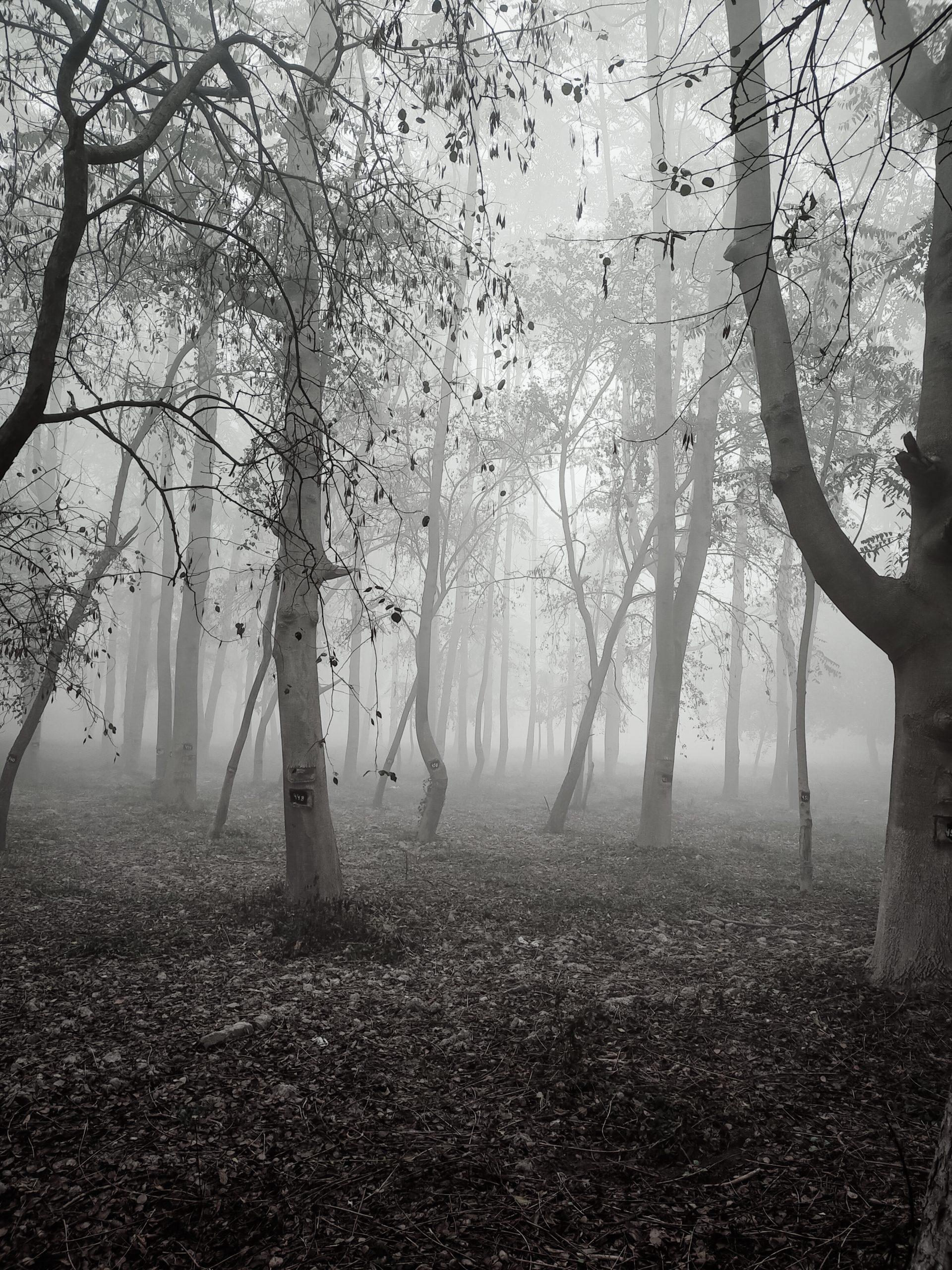 Fog in a jungle