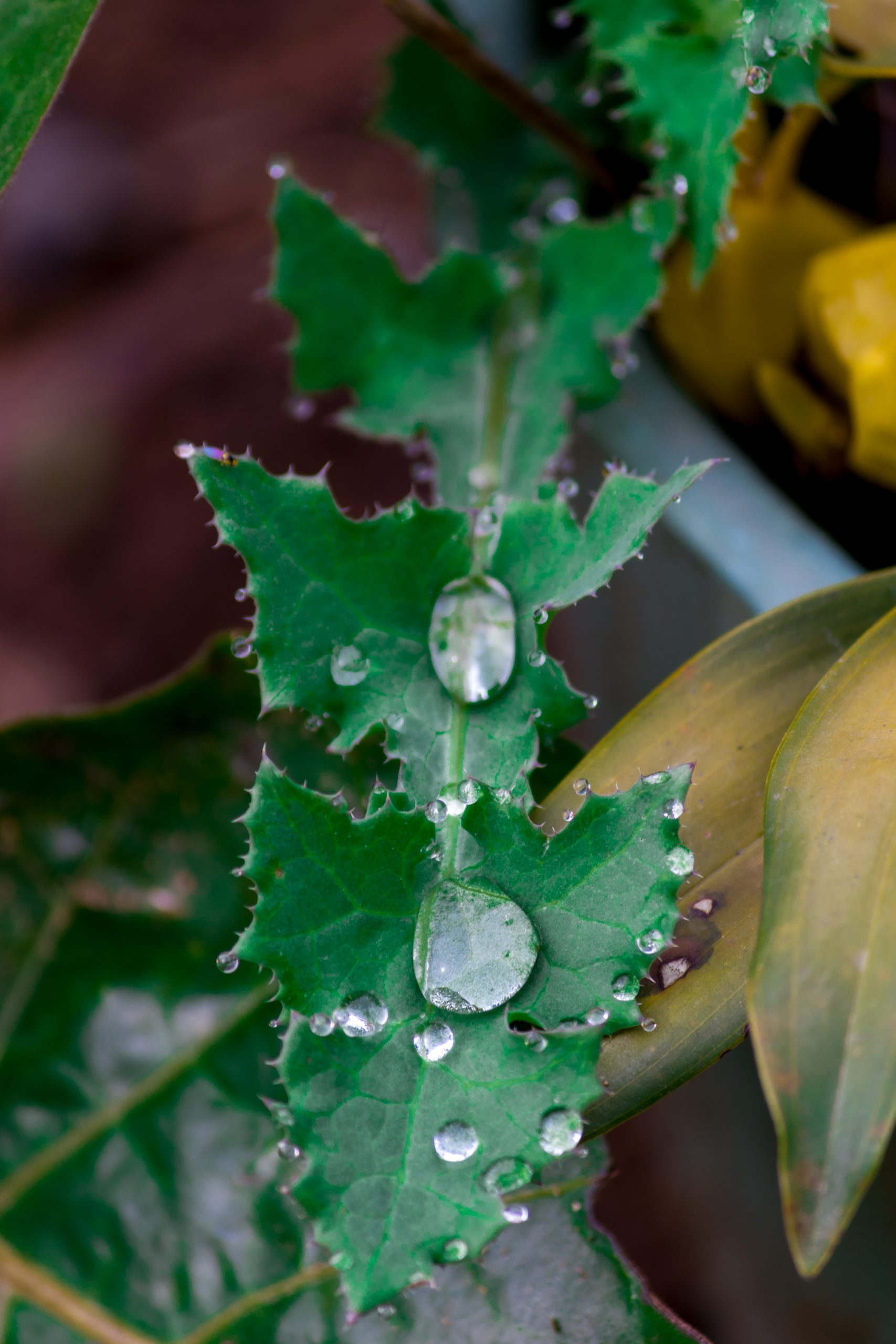 Water drops on a leaf
