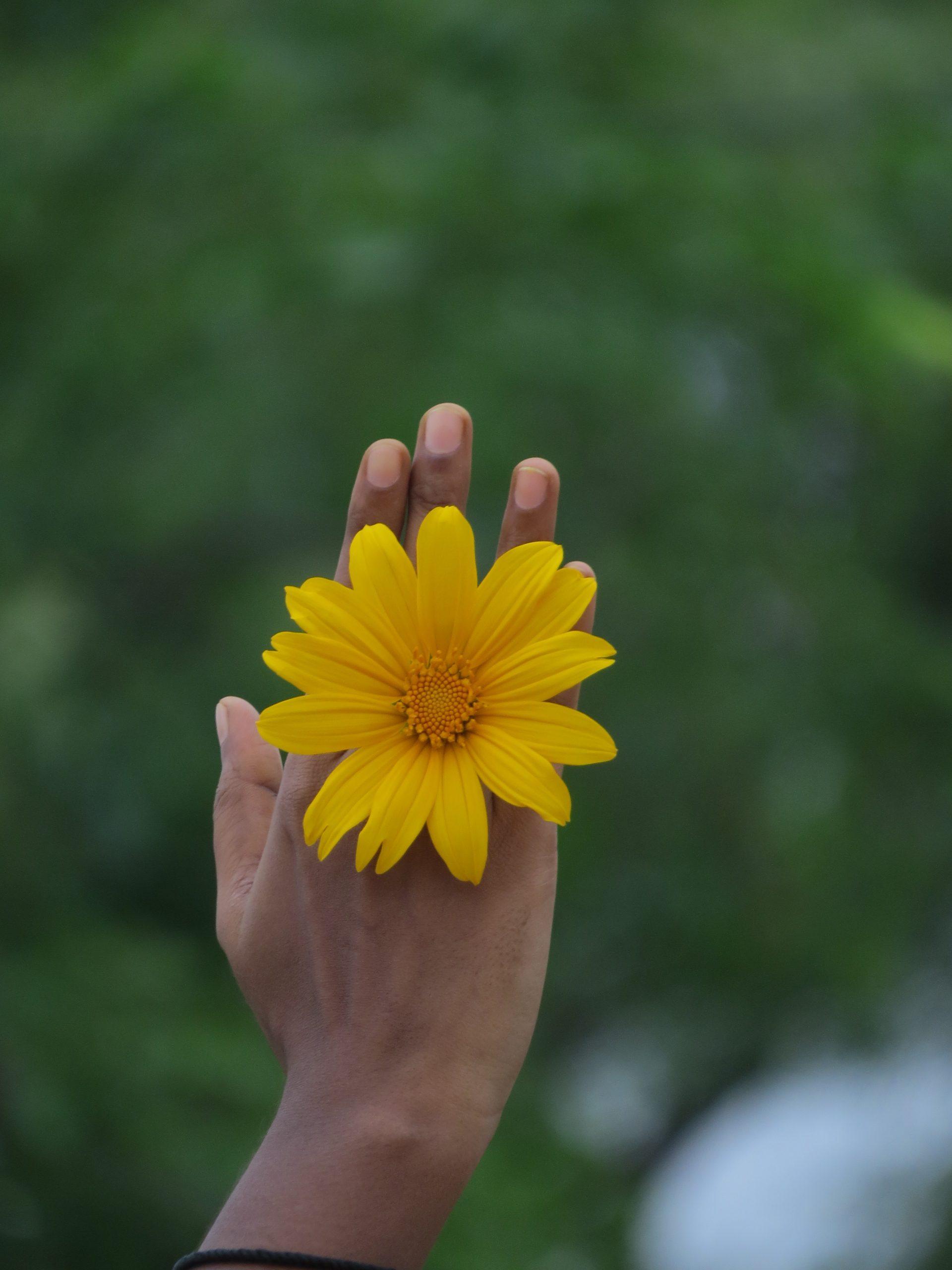 Yellow flower in hand