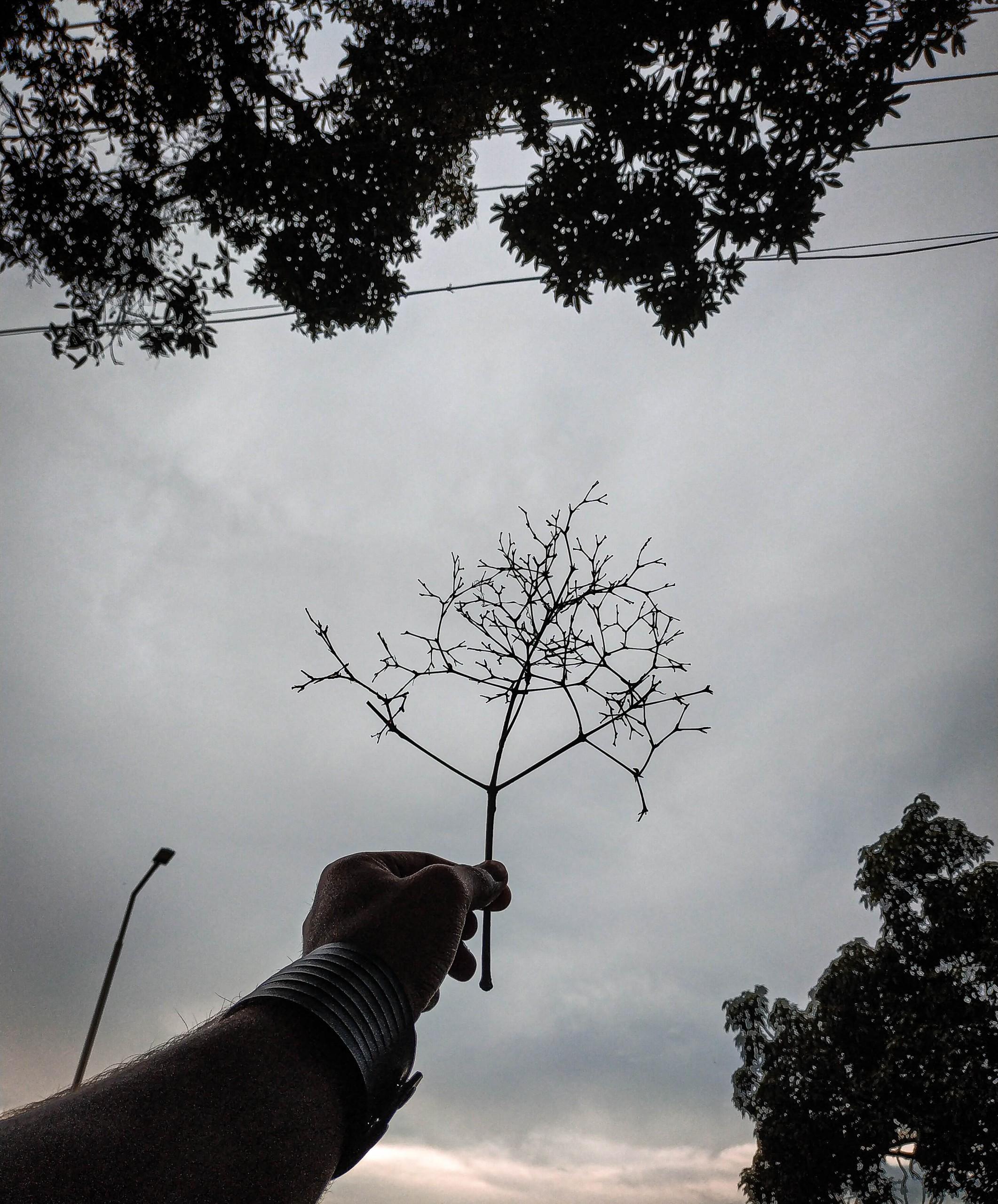 Hand Holding Tree Twigs