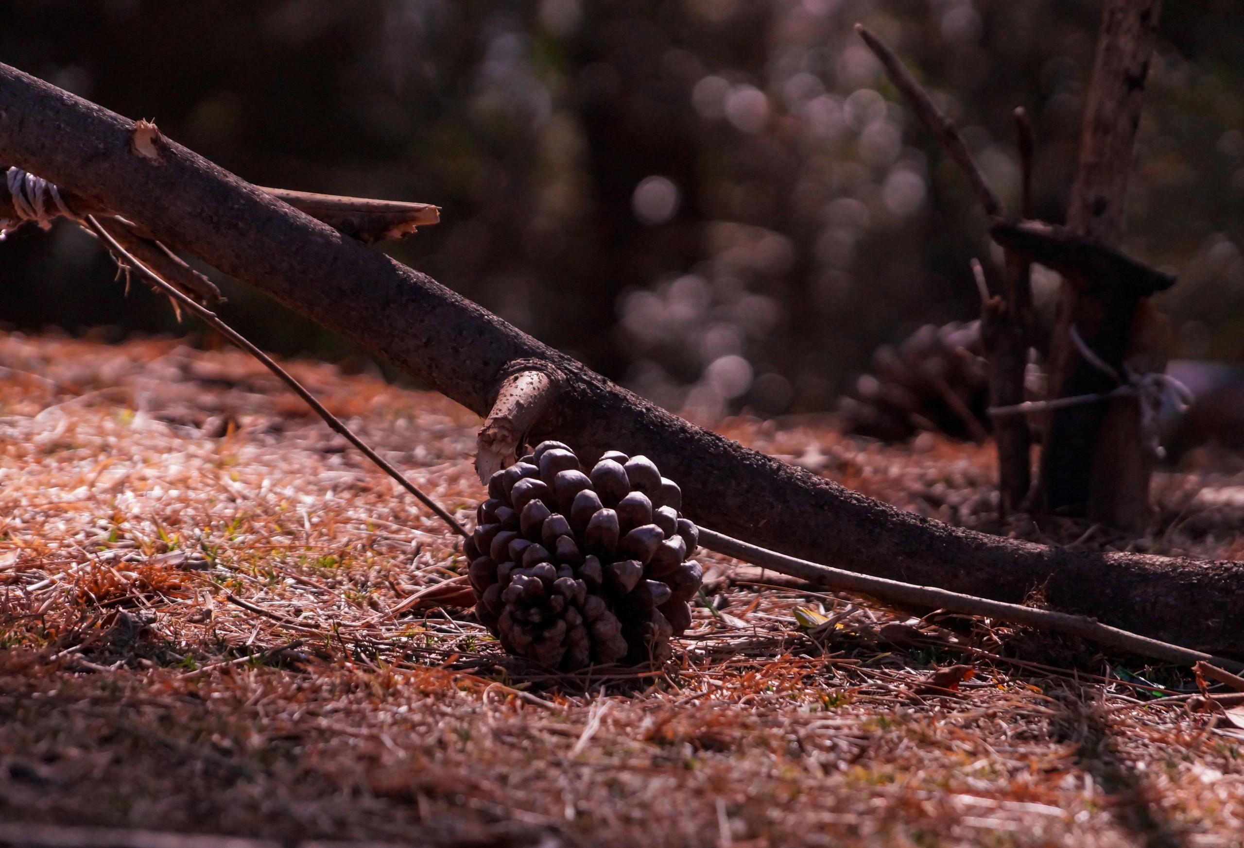 Fallen Fruit of a Tree